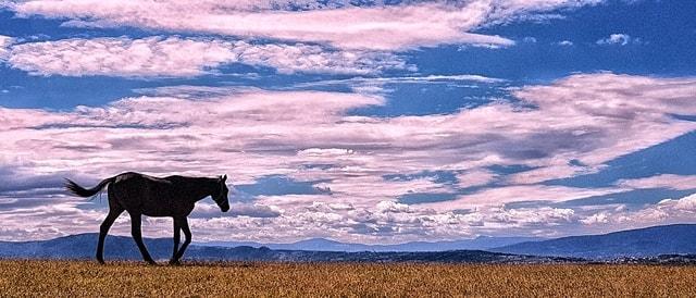 sky-cloud-prairie-landscape-field picture material