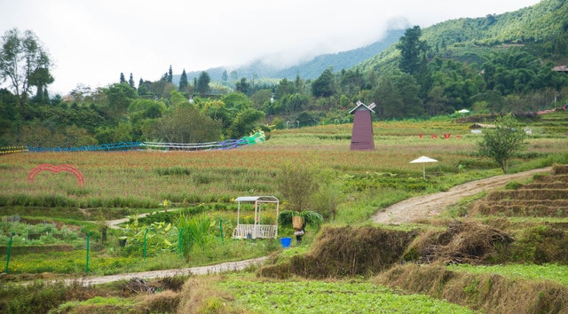 field-farm-agriculture-pasture-grass picture material