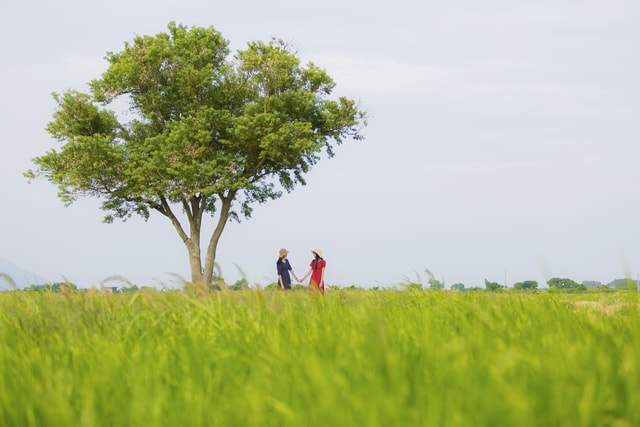 field-grass-tree-agriculture-sky picture material