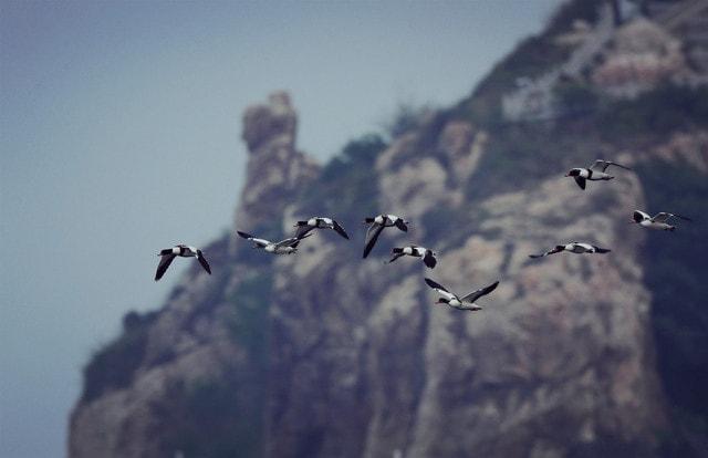 sky-bird-flight-flock-seagulls picture material
