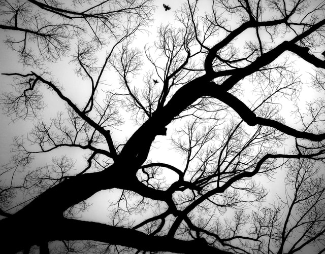 branch-tree-silhouette-trunk-winter picture material