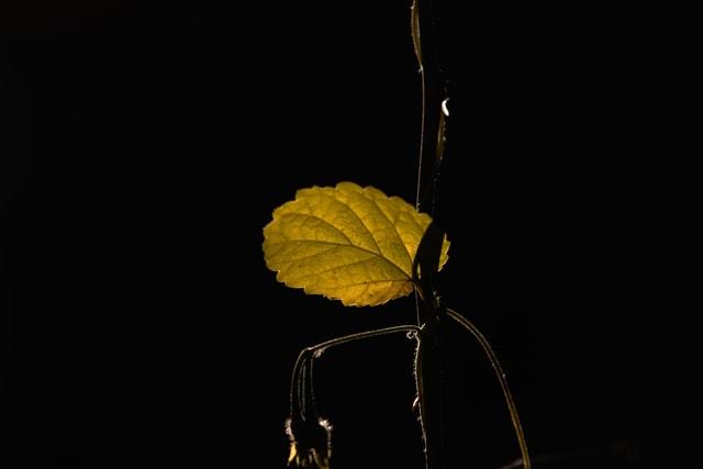 leaf-dark-tone-leaves-backlighting-october picture material