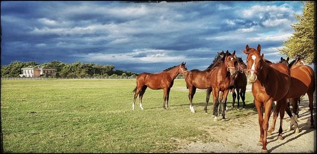 horse-pasture-mare-grassland-grass picture material