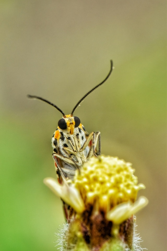insect-invertebrate-wildlife-pest-butterfly picture material