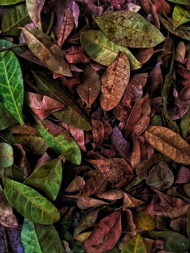 leaf-flora-herb-autumn-desktop picture material