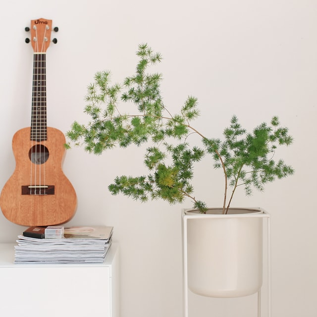 guitar-music-no-person-instrument-bowed-stringed-instrument picture material