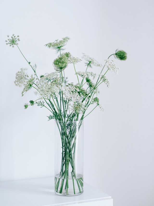 vase-flora-herb-branch-no-person picture material