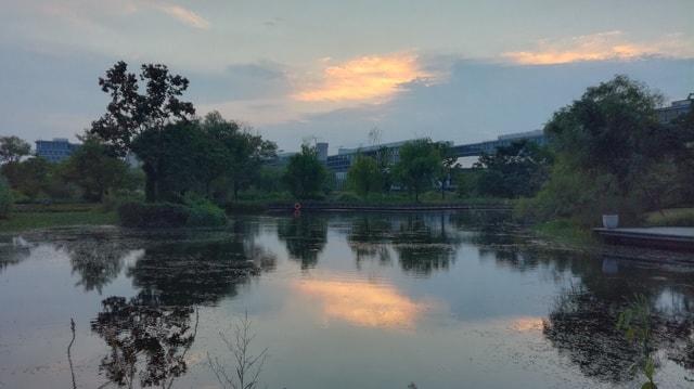evening-in-the-brazilian-creek-park-in-ariba picture material