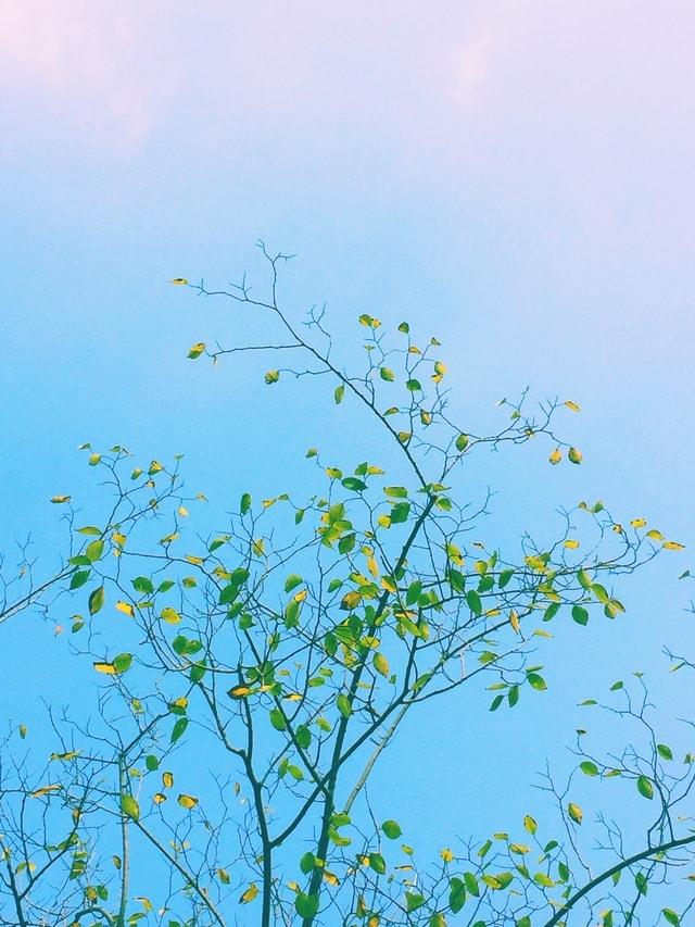 sky-flora-leaf-branch-flower picture material