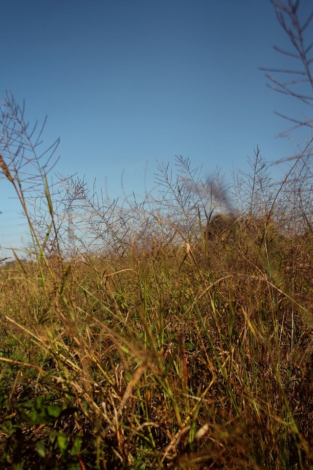 sky-grass-leaf-tree-field picture material
