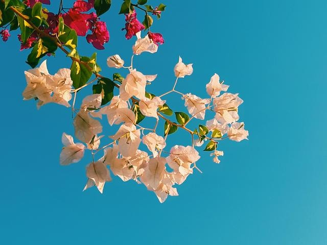 flower-sky-branch-flora-tree picture material