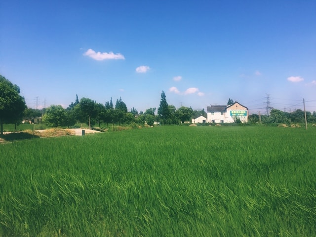 field-agriculture-pasture-farm-sky picture material