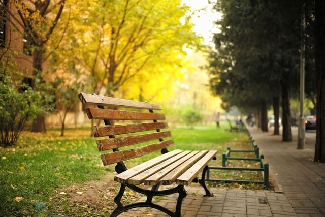 nature-leaf-tree-bench-wood picture material