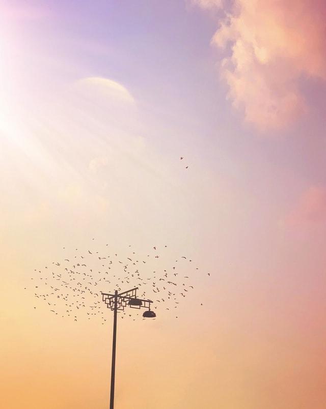 sky-dawn-evening-dusk-sun 图片素材