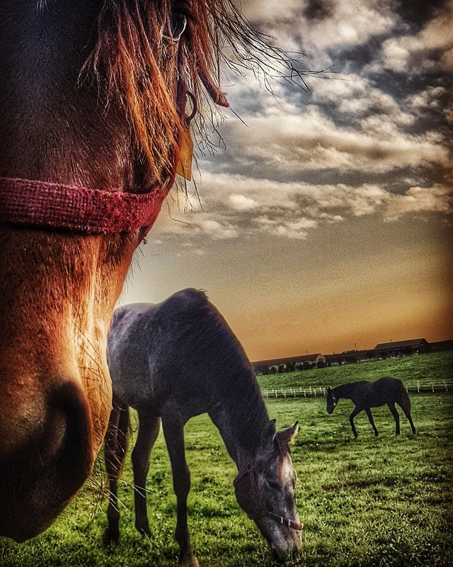 grass-mane-horse-pasture-livestock picture material