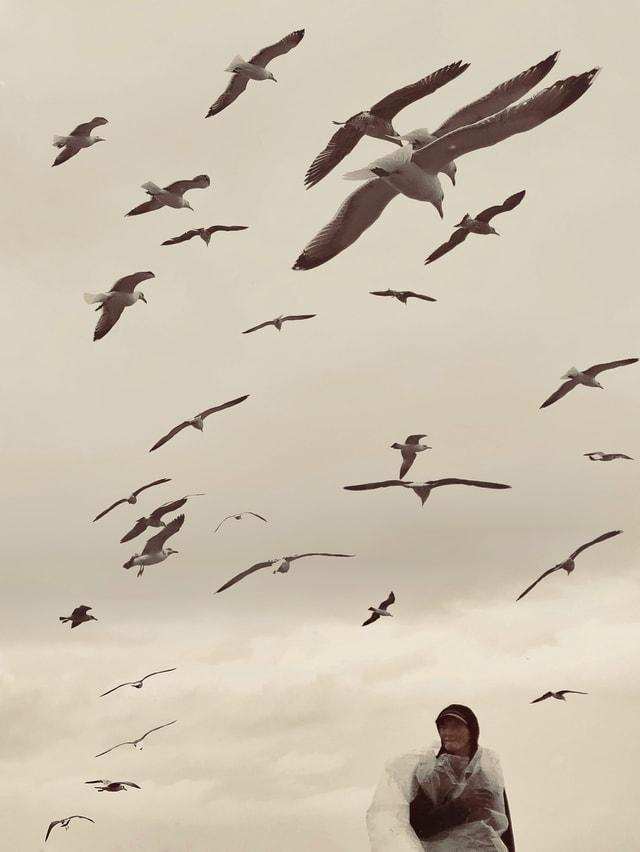 bird-sky-flock-mobile-phone-november picture material