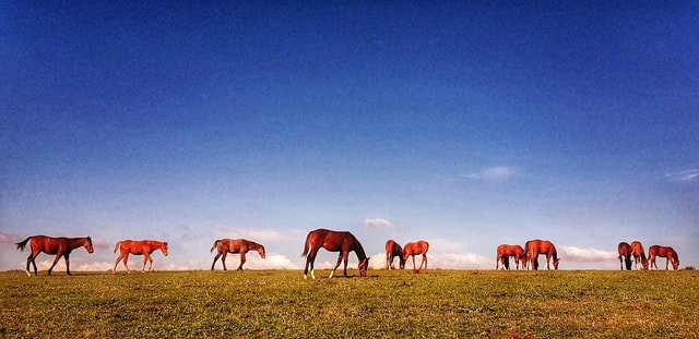 grassland-sky-pasture-prairie-field picture material