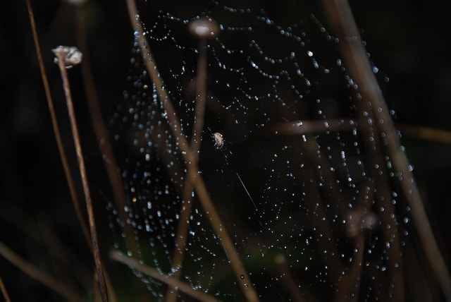 water-moisture-dew-night-view-spider-web picture material