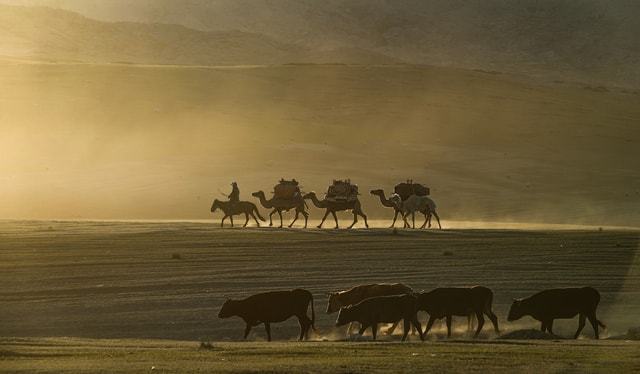 herd-wildlife-safari-landscape-sand picture material