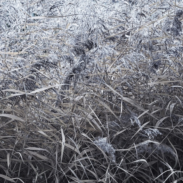 frost-winter-grass-snow-pattern picture material