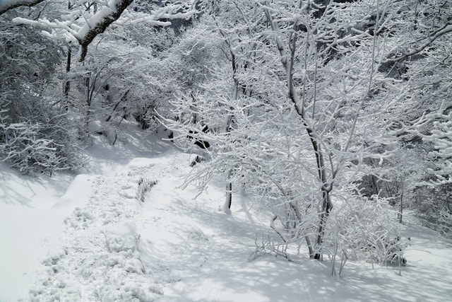 after-the-snow-huangshan picture material