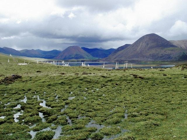 highland-grassland-ecosystem-fell-vegetation picture material