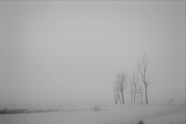 fog-winter-mist-snow-landscape 图片素材
