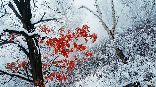 winter-snow-tree-branch-frost picture material
