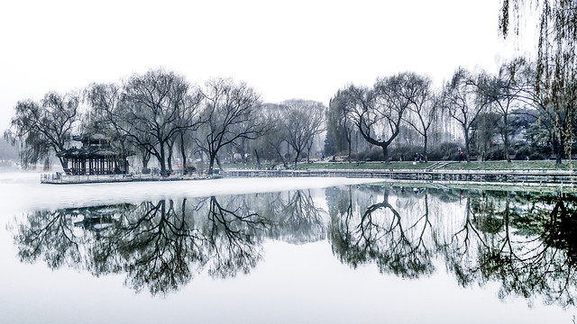 winter-tree-landscape-wood-reflection 图片素材