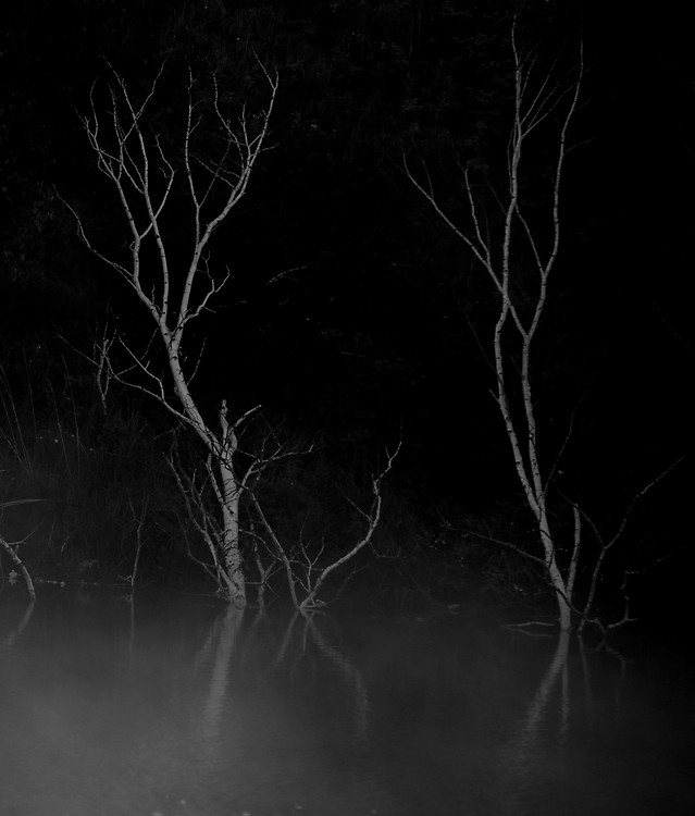 eerie-dark-scary-skittish-tree picture material