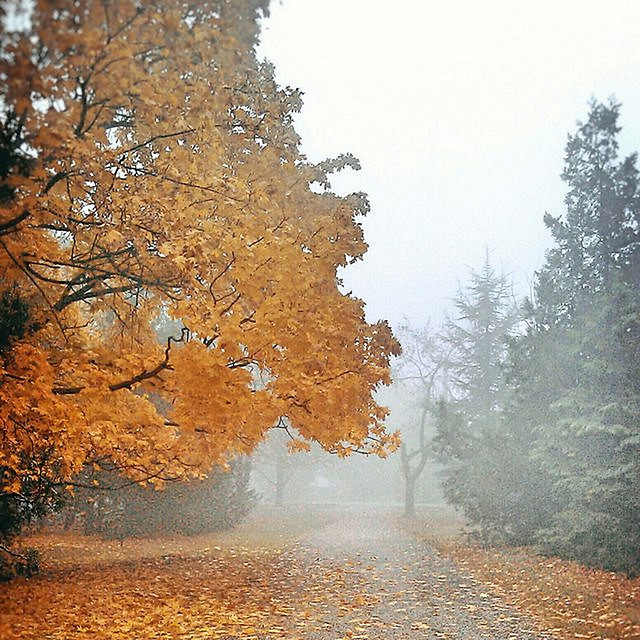 fall-tree-leaf-wood-fog picture material