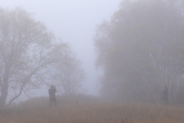 fog-mist-landscape-tree-weather picture material
