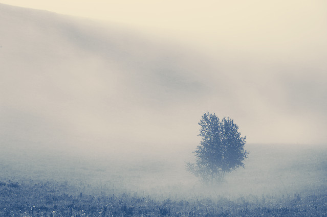 fog-winter-sky-landscape-nature picture material