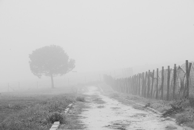 fog-no-person-mist-landscape-black-white picture material