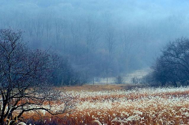 landscape-tree-no-person-dawn-nature 图片素材