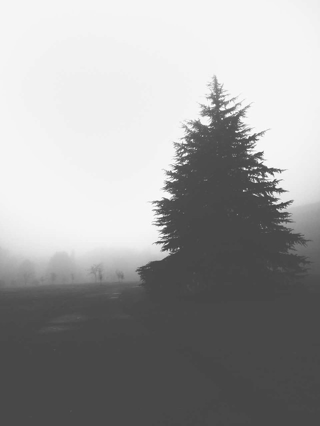 fog-tree-winter-no-person-mist picture material