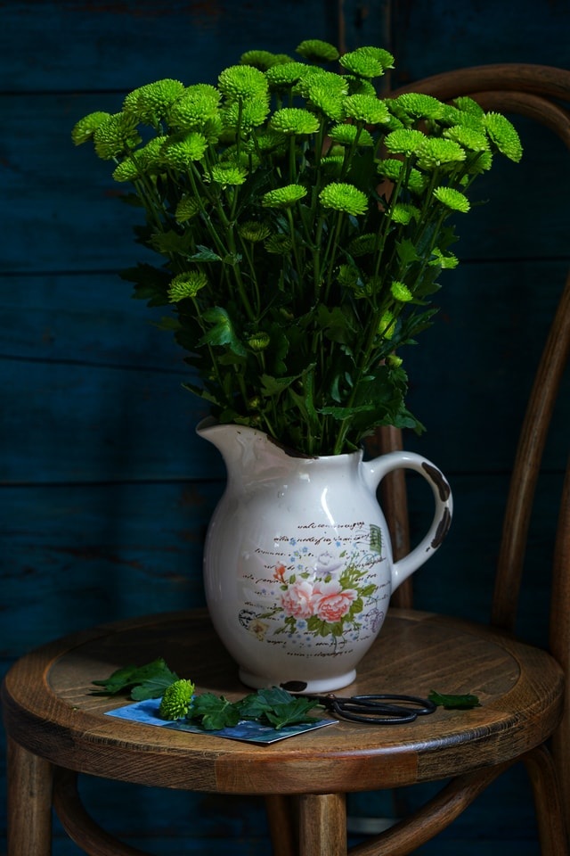 flora-still-life-herb-flower-daisy picture material
