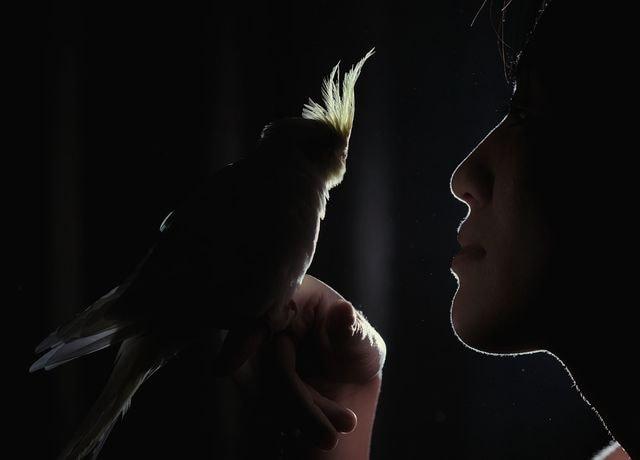 vertebrate-darkness-backlighting-bird-human picture material