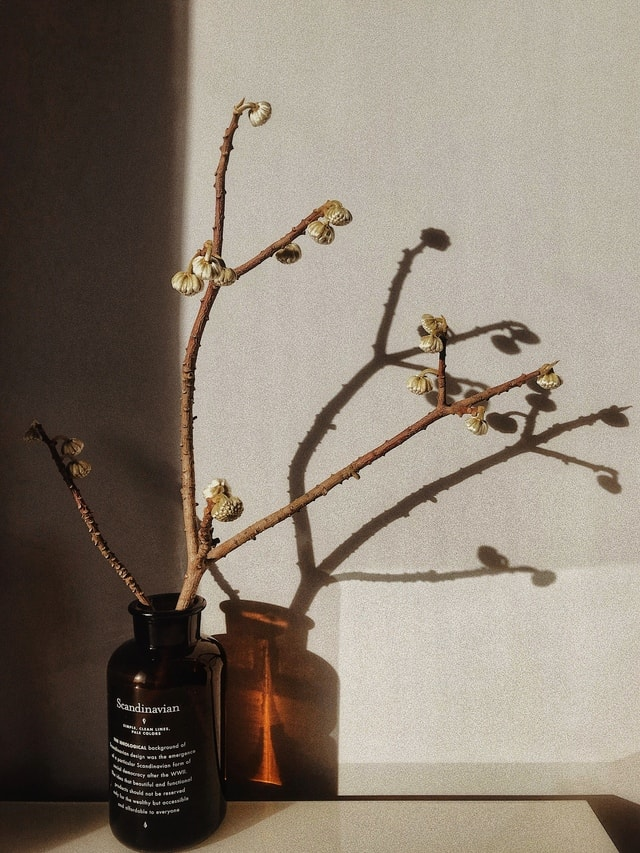 mobile-photography-branch-ikebana-twig-still-life-photography picture material