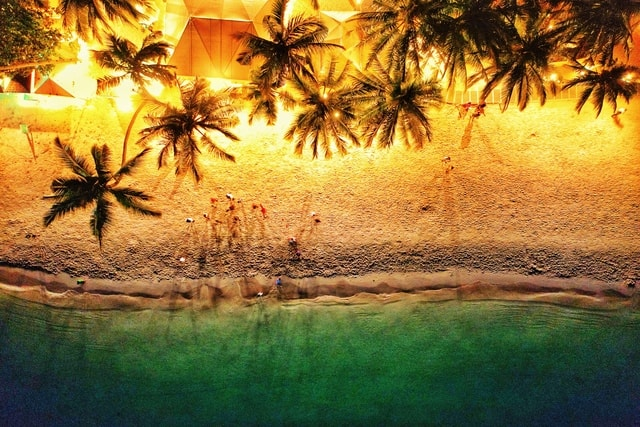 vacation-play-friend-coconut-tree-happy picture material