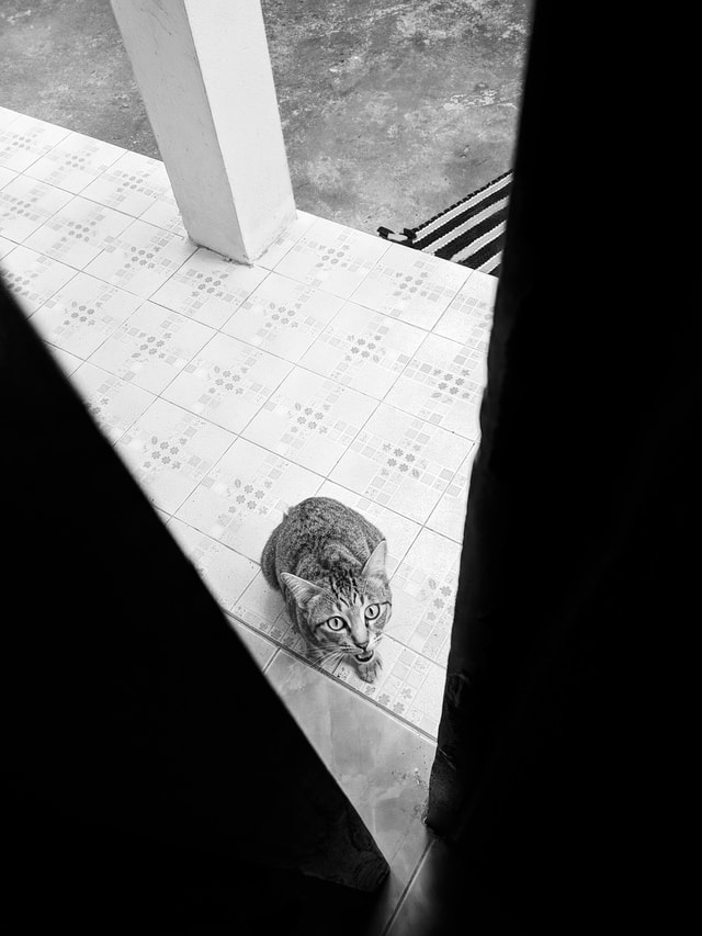 black-white-bw-cat-animal picture material