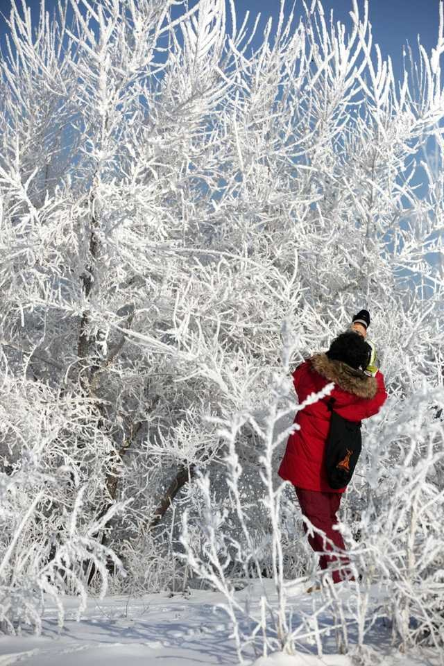 snow-freezing-winter-frost-water 图片素材