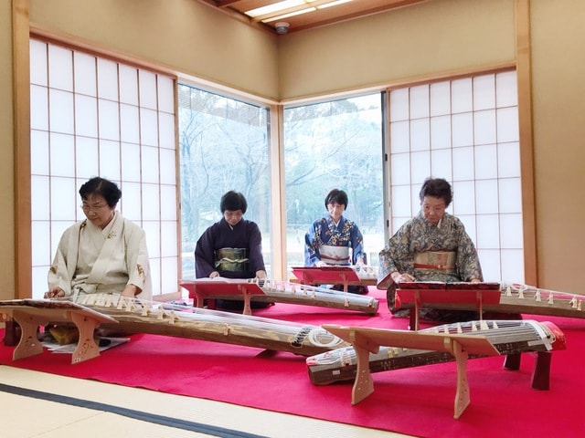 musical-instrument-koto-traditional-japanese-musical-instruments-gayageum-geomungo picture material
