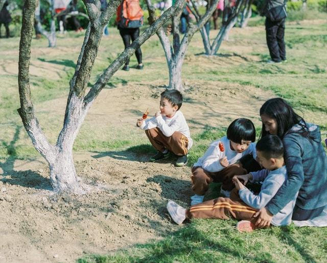tree-adaptation-community-child-fun picture material