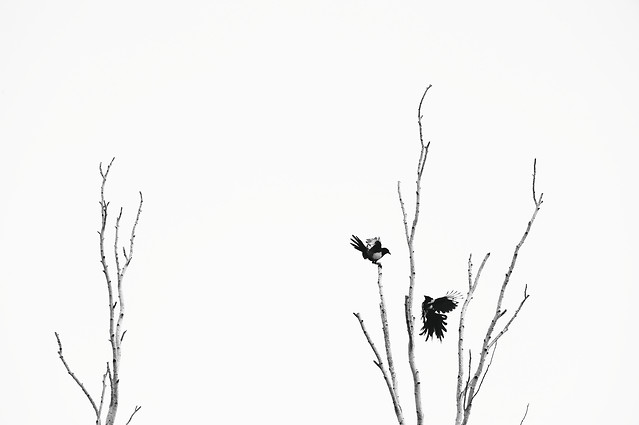 nature-silhouette-tree-leaf-branch picture material