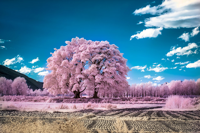 landscape-nature-sky-tree-no-person 图片素材