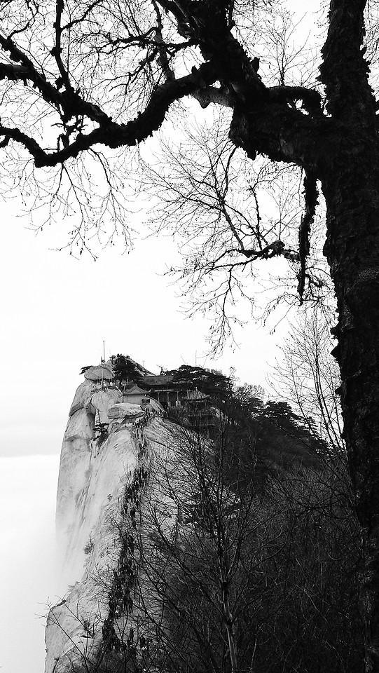 tree-no-person-winter-snow-monochrome picture material