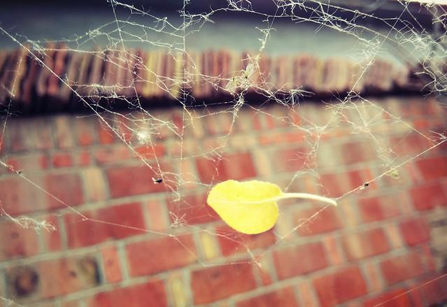 web-spider-water-desktop-spiderweb picture material
