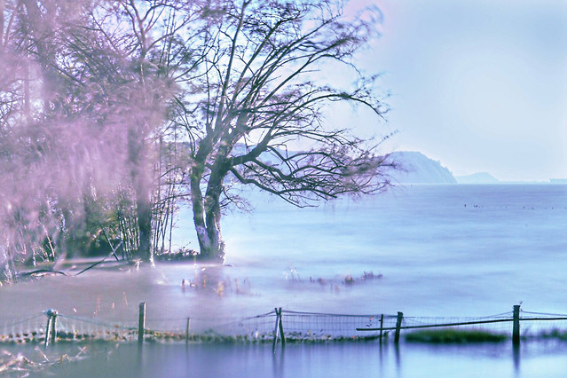 landscape-nature-tree-water-lake picture material