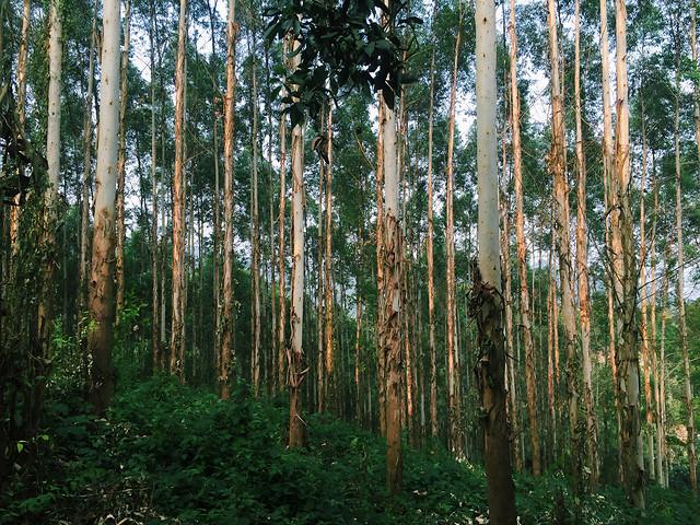 wood-tree-nature-leaf-landscape 图片素材